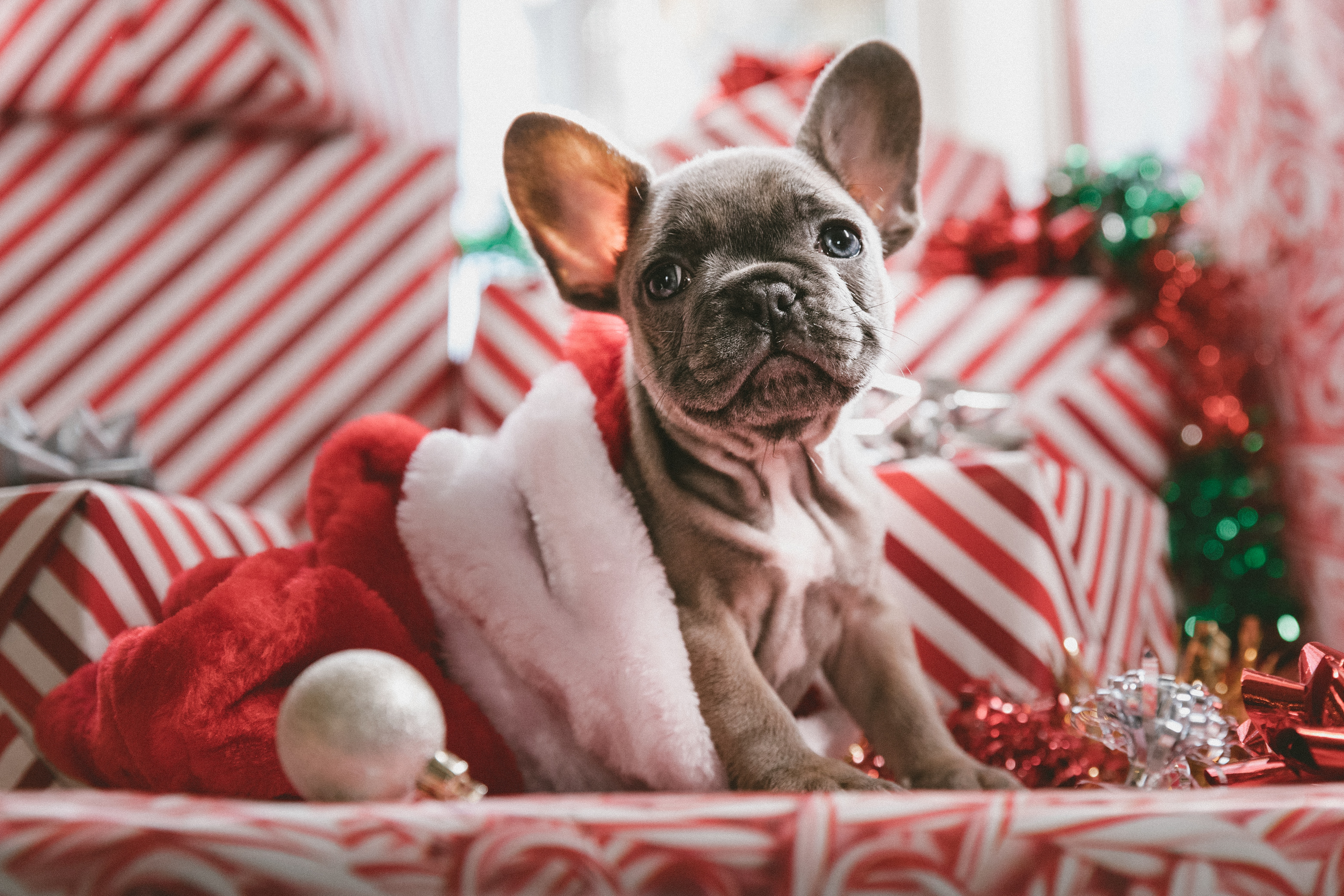 10 Adorable Pet-Friendly Gifts from The Food Network